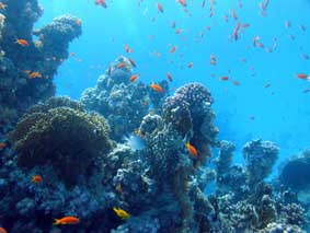 Подводные съемки микророботом ГНОМ, Красное море